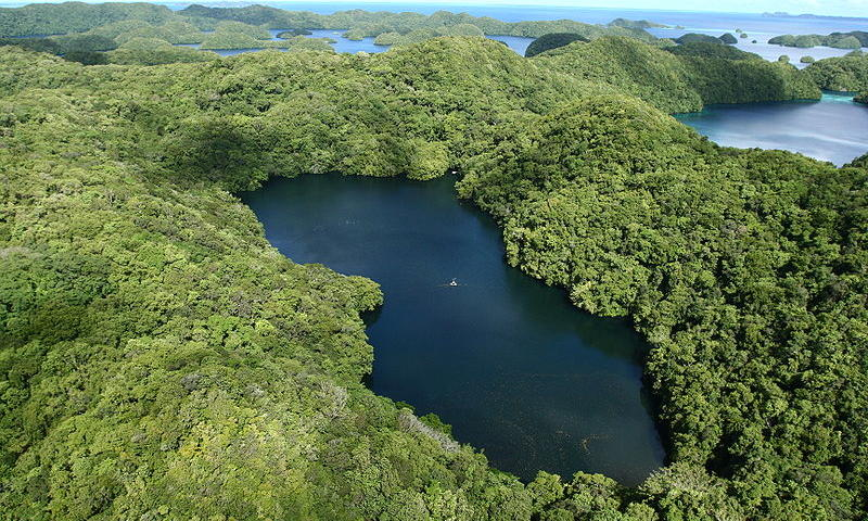 Aerial View of Jellyfish Lake
