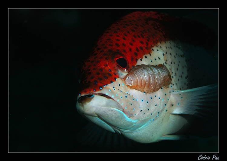 Parasites Fish