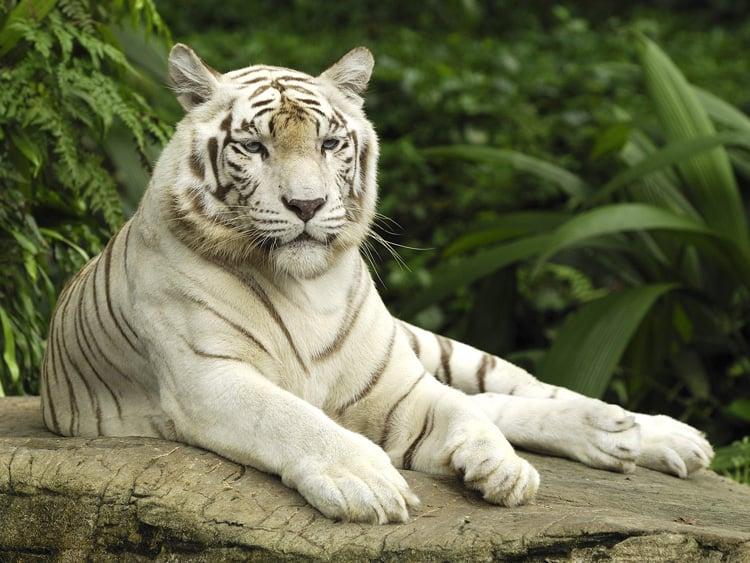 Leucism In Animals