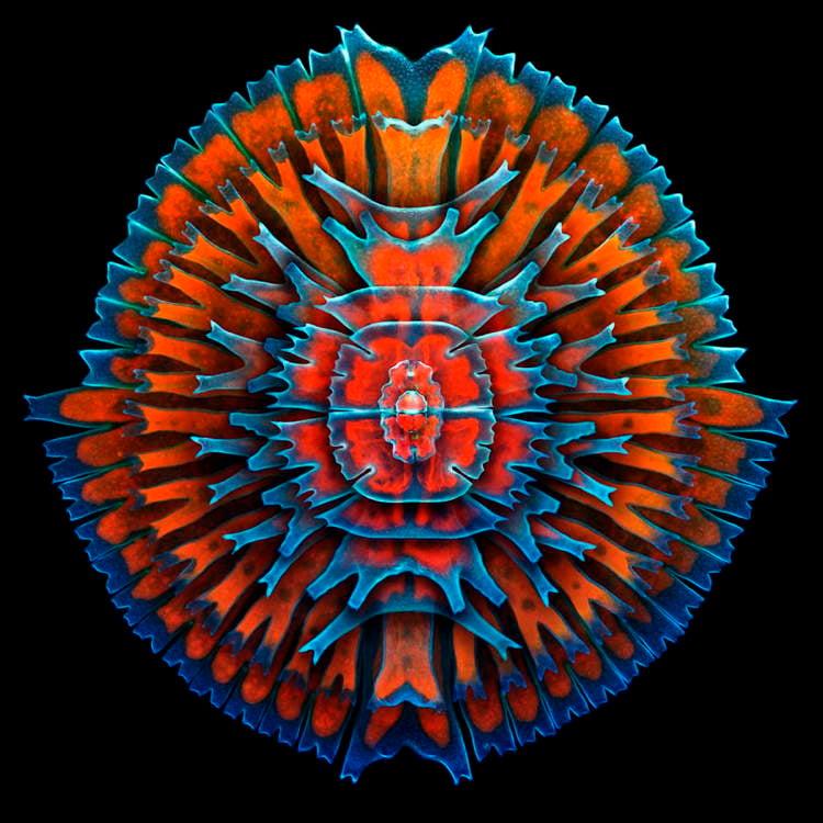 Microscopic Photography Freshwater ALgae