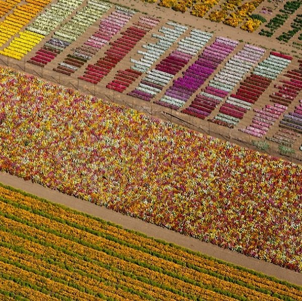 Aerial Images of Colorful Flower Fields