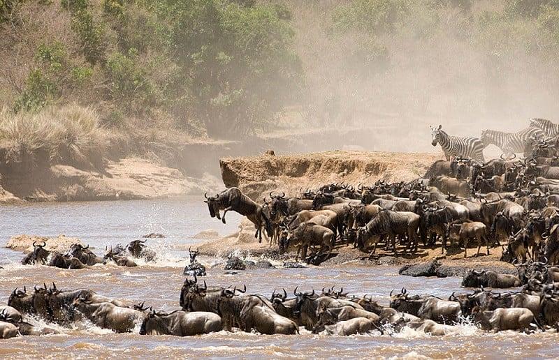 Natural Events Serengeti Migration