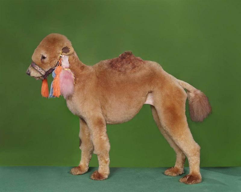 Dapper Dog Grooming Fayetteville Ar
