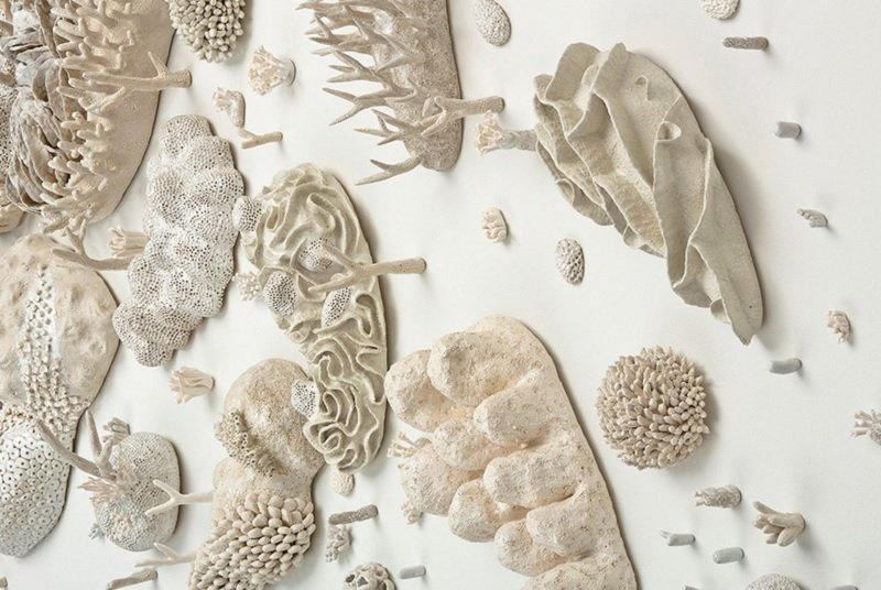 Bleached Coral Artwork