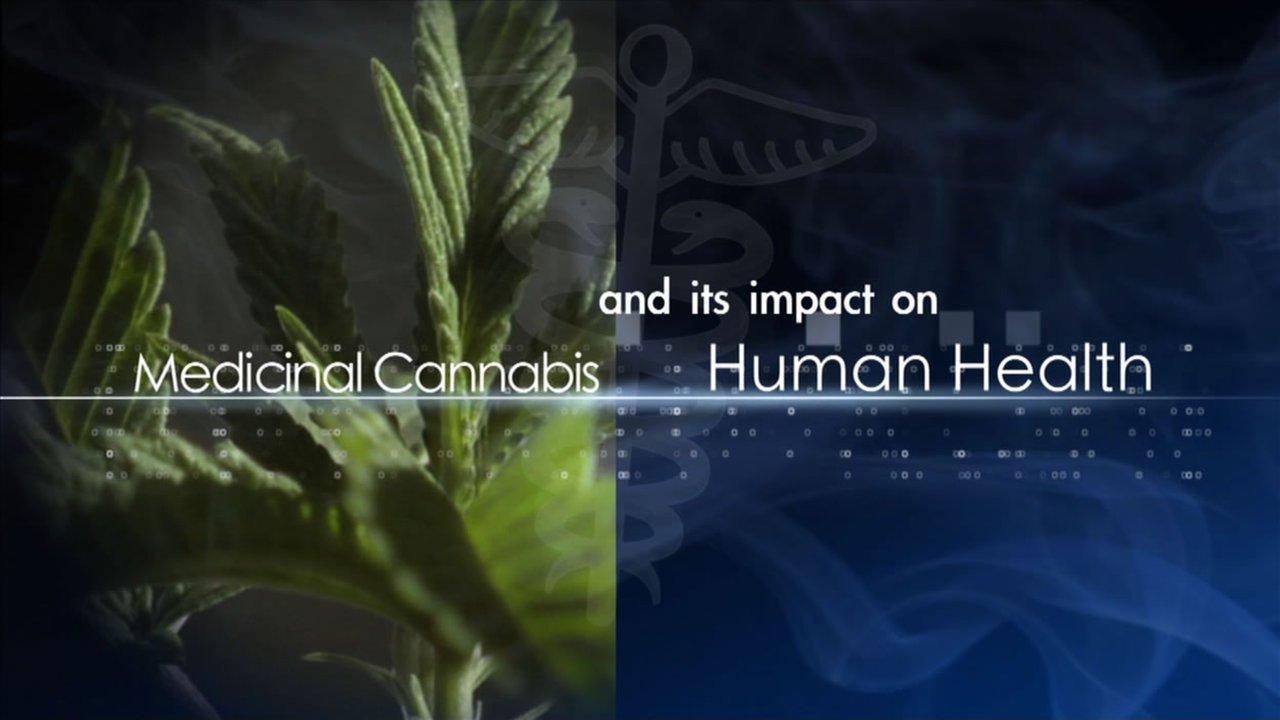 Everything You Need To Know About Cannabis And Its Impact On Health
