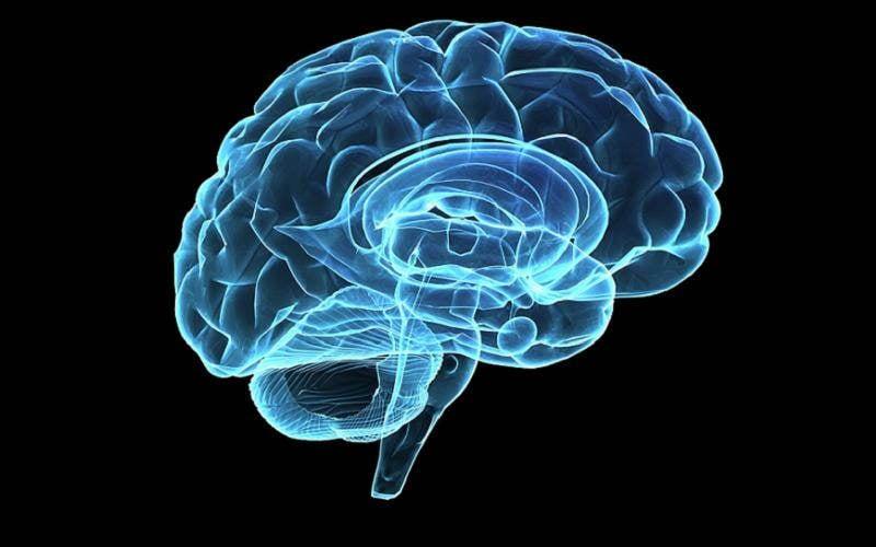 Interesting Diseases Brain