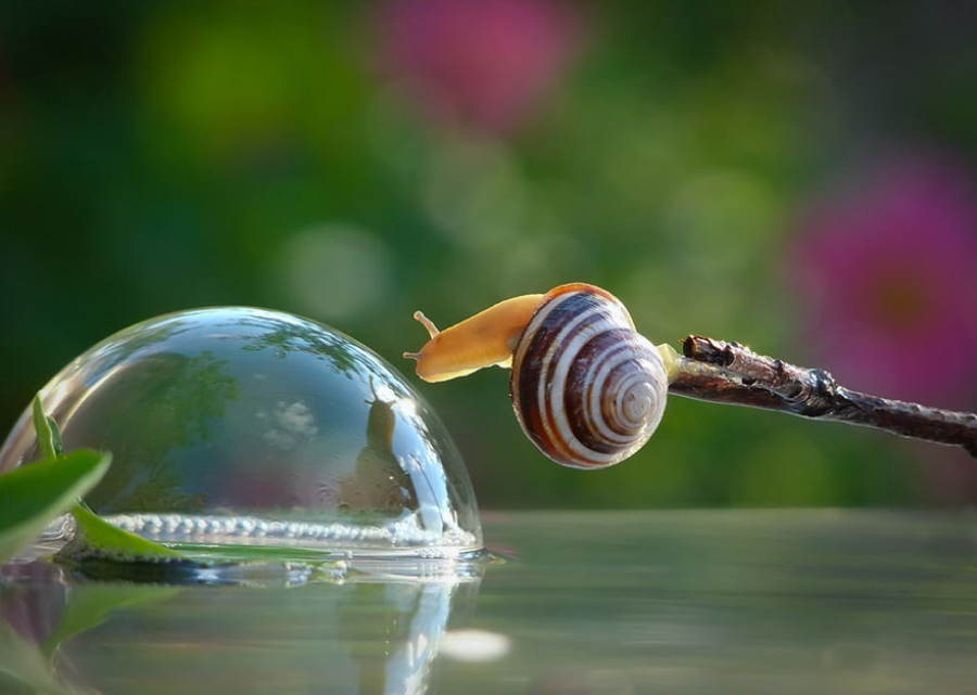 Snails Bubble