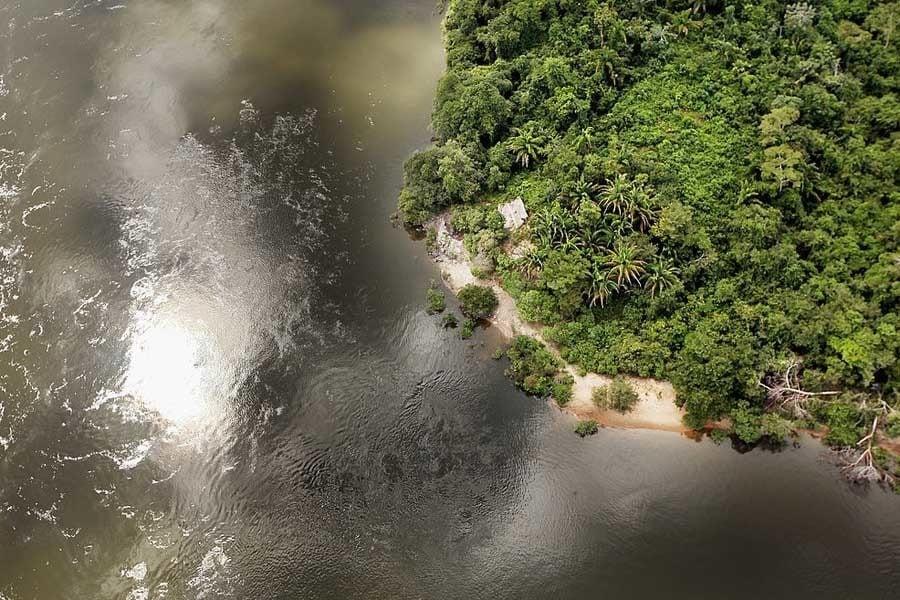 25 Rainforest Facts Amazon Basin