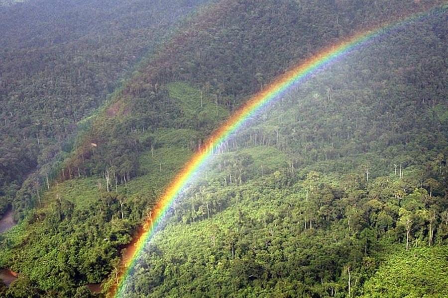 Malaysian Rainbow