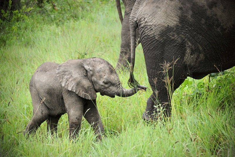 Adorable Animal Video Baby Elephant