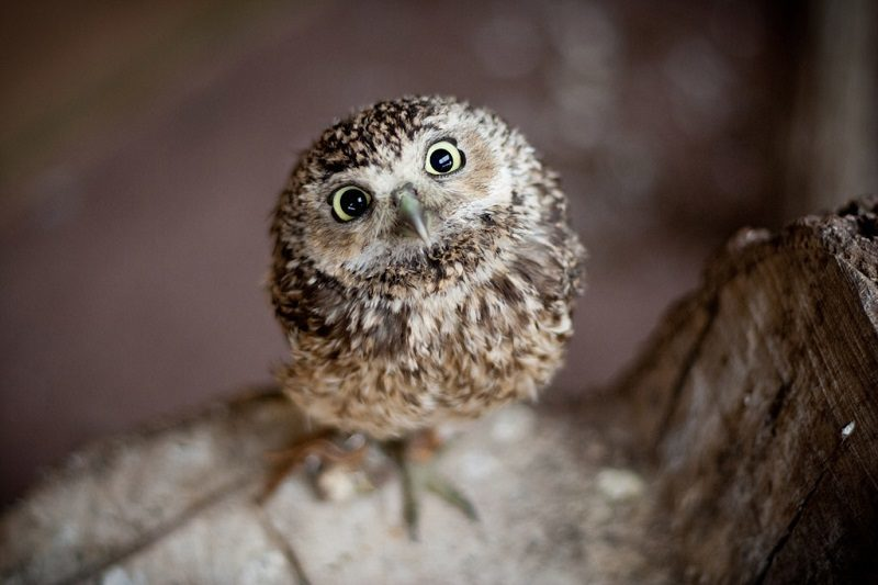 Adorable Animal Video Baby Owl