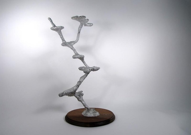 Anthill Art From Carpenter Ant Colony