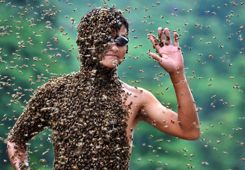 Bee Bearding Half Body