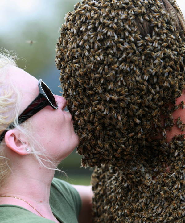 Bee Beards Pictures