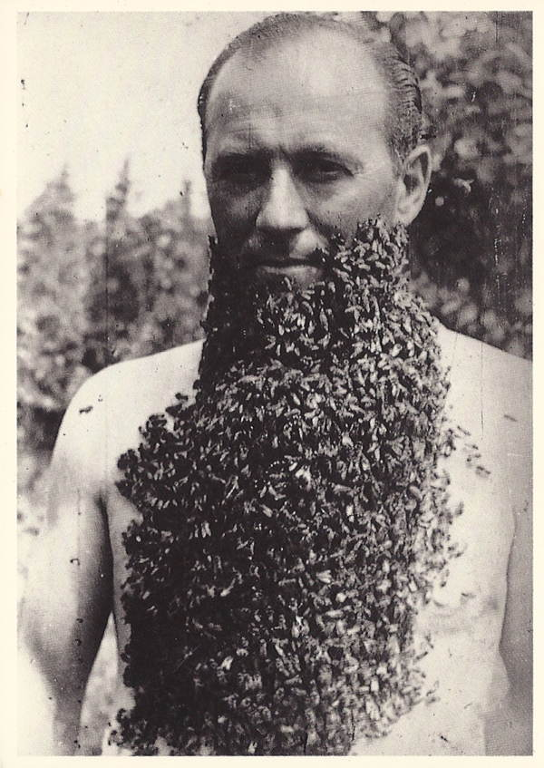 Bee Bearding Old Photo