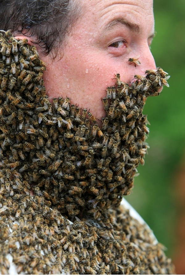 Bee Bearding Profile View
