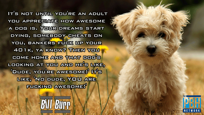 Bill Burr Quotes On Dogs