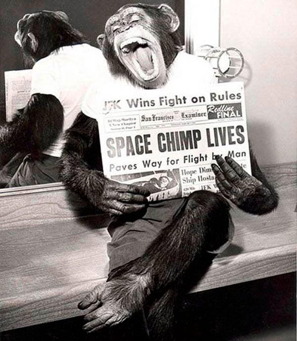 Bizarre Photos Space Chimp