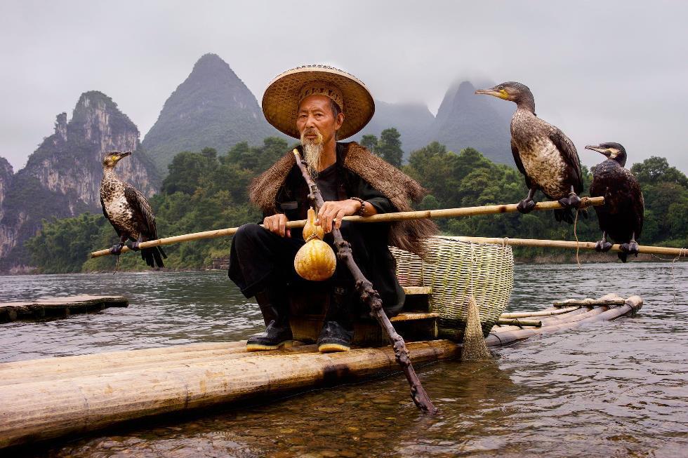 Cormorant Fisherman Li River