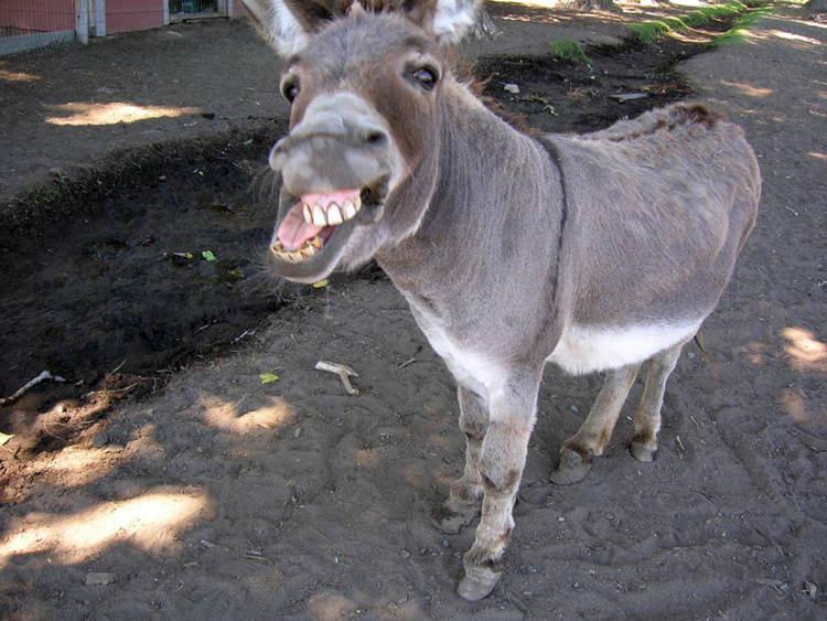 Craziest Laws Donkey