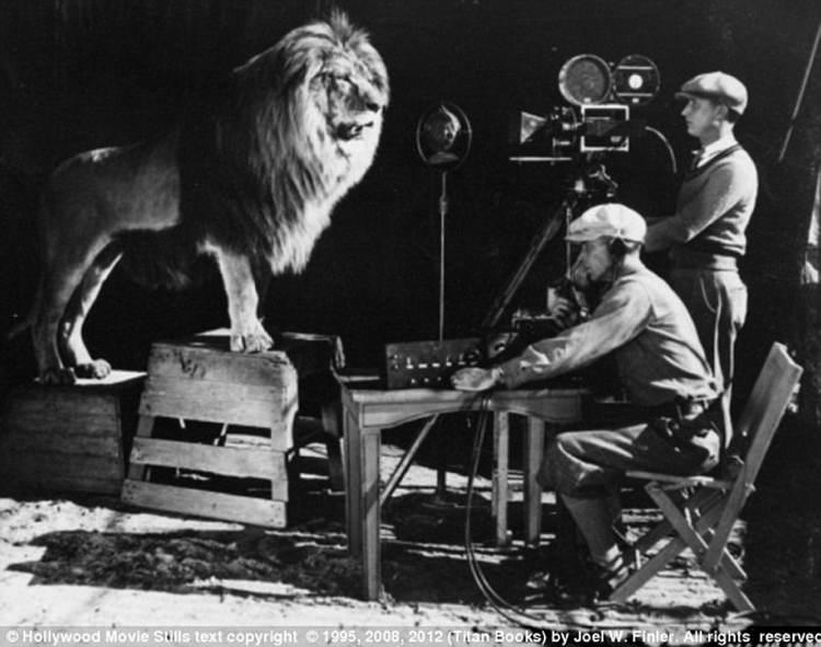 Pet Lion Law