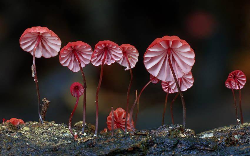 Fungi Red Mushrooms