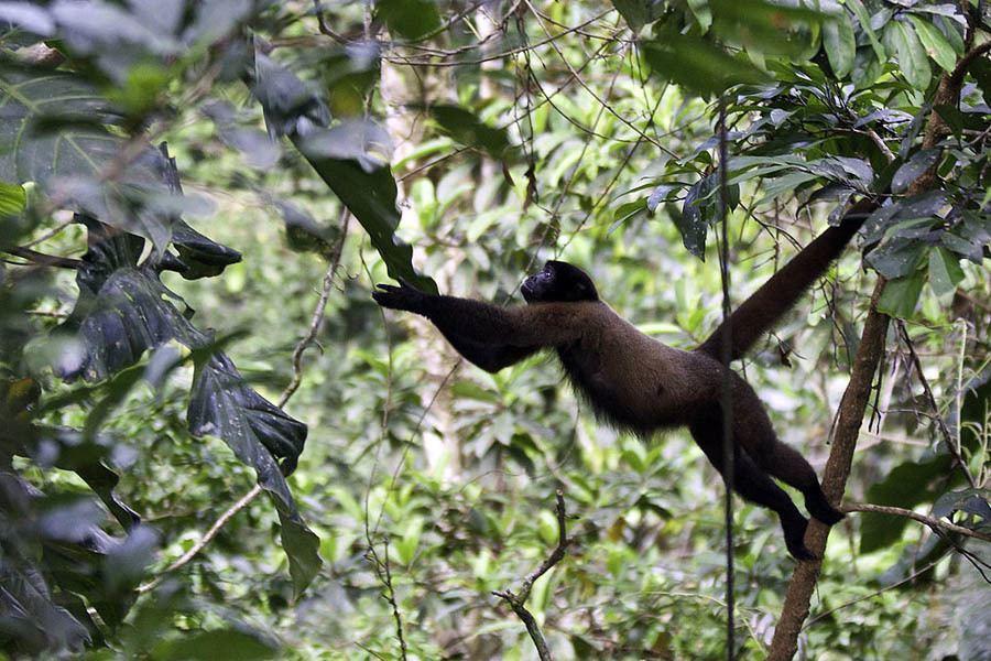 Monkey Stretch