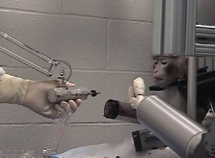 WTF Science Experiments Chimps