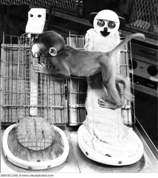 WTF Science Experiments Monkeys Despair