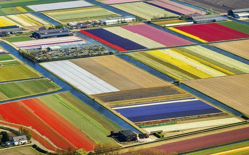 Aerial Photo of Tulip Fields from TIME