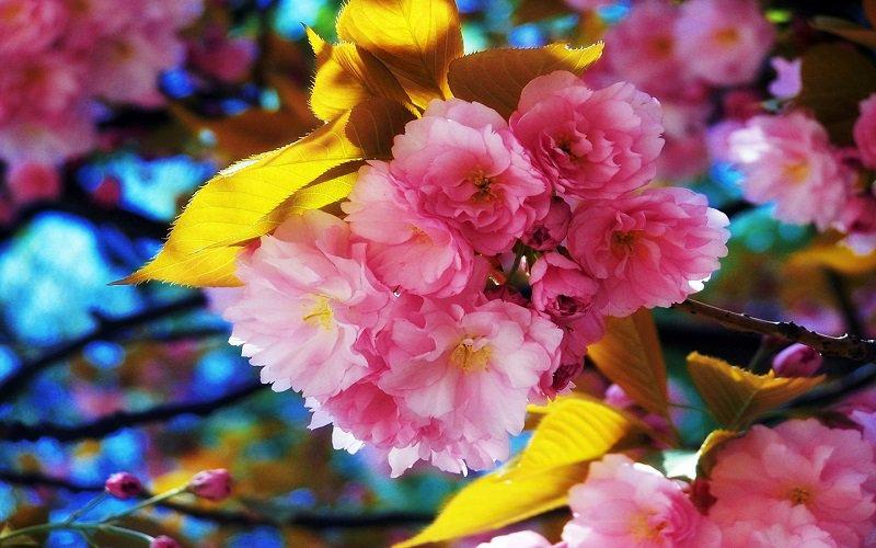 Beautiful, Colorful Flowers