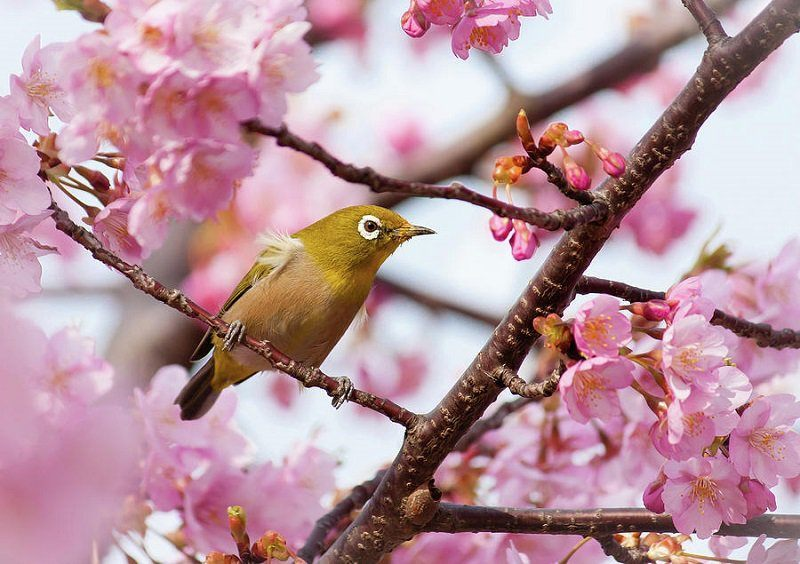 Bird Perched in Spring Blooms