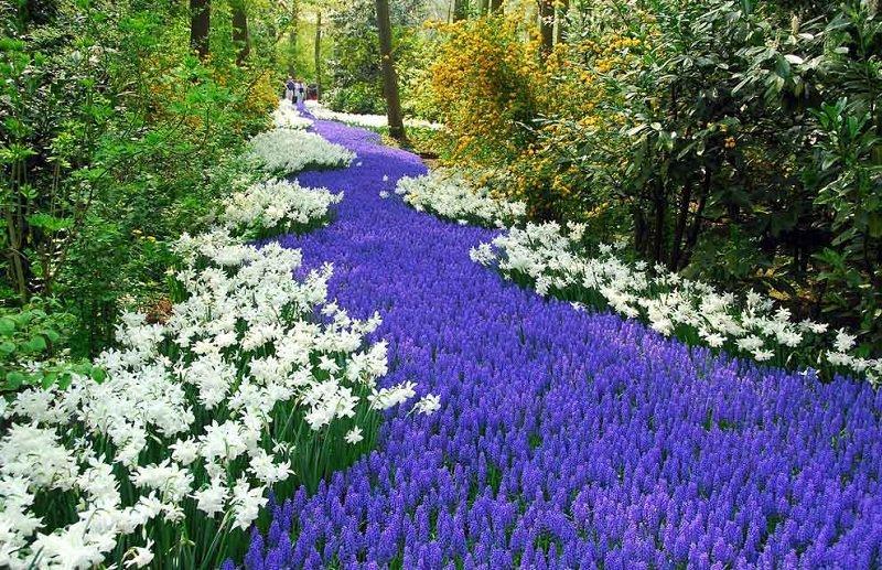 Road Of Blue Flowers