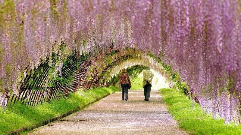 Pink Spring Blooms