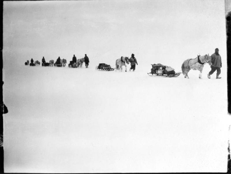 Antarctic Exploration Horse Sleds
