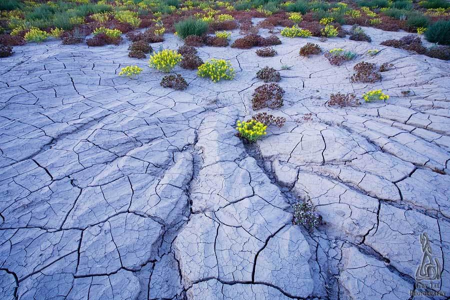Desert Wildflowers Vortex