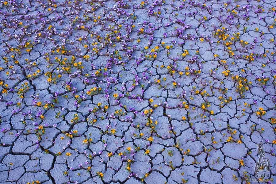 Cracks In Ground