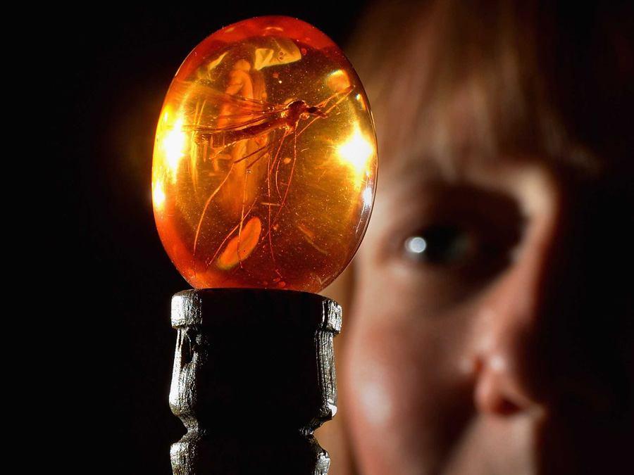 Bad Science Jurassic Park Amber
