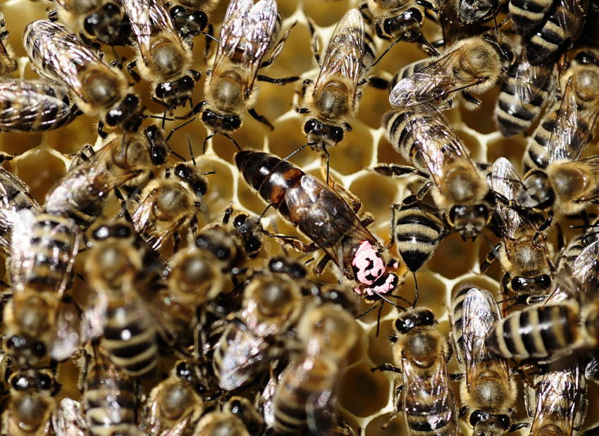 Natural Phenomena Colony Collapse Bees