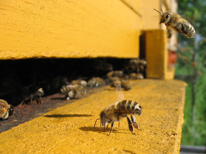 Natural Phenomena Colony Collapse