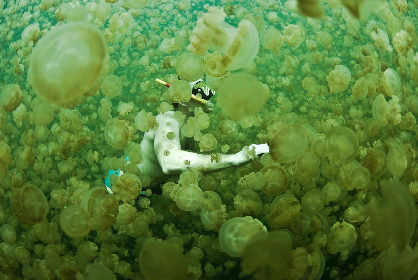 Natural Phenomena Jellyfish Diver