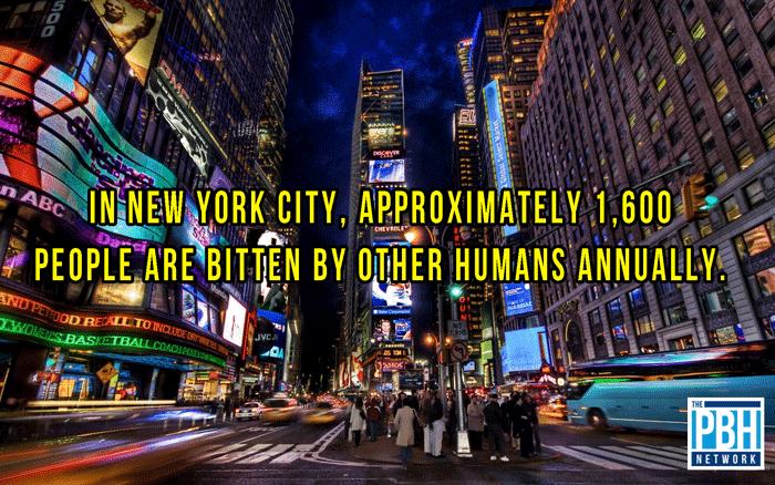 Amazing Facts New York City Biters