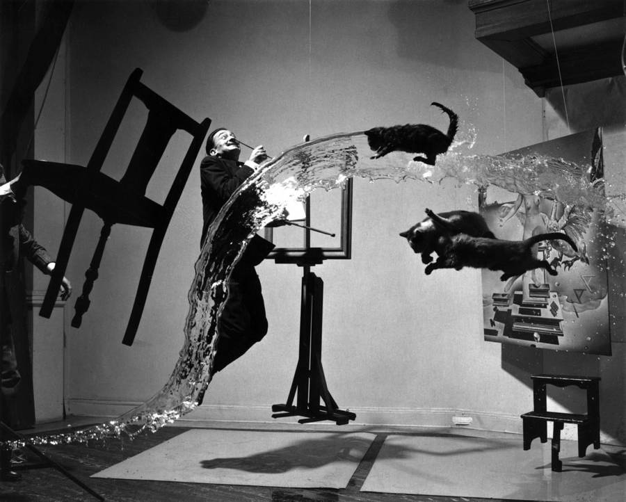Dali Cat Water Chair