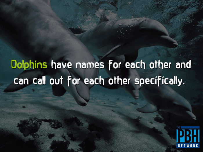 Dolphin Names