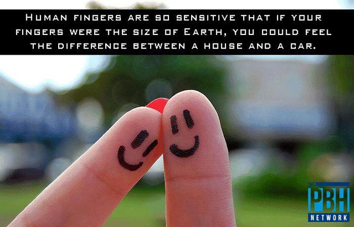 Human Finger Sensitivity
