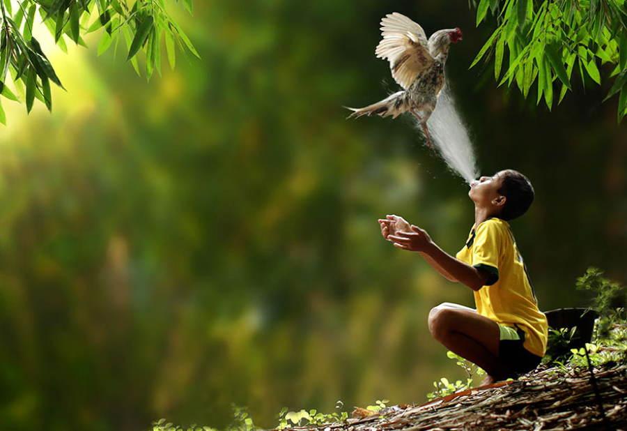 Indonesia Village Boy Bird