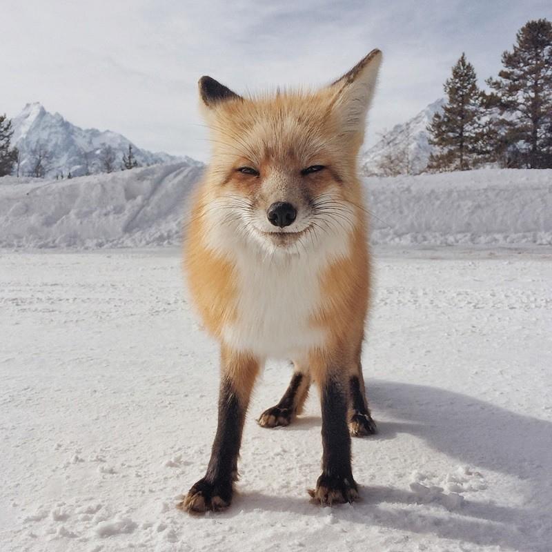 Fox Photo Award