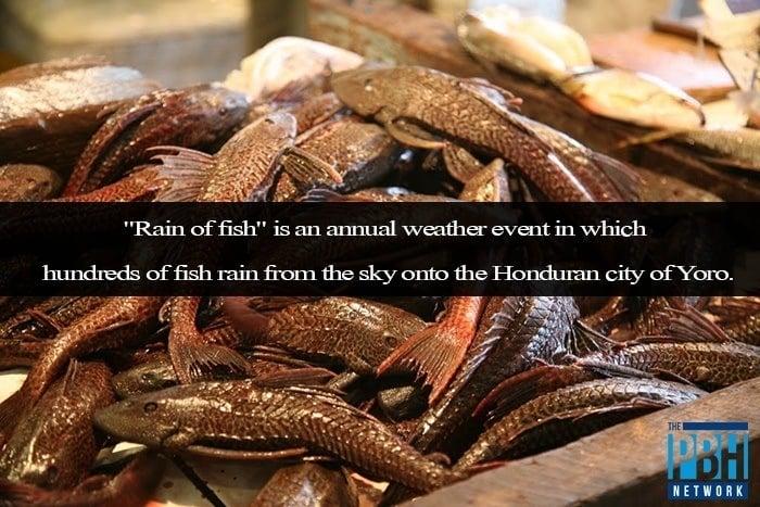Rain Of Fish