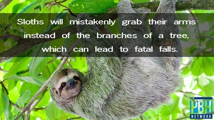 Sloth Fails