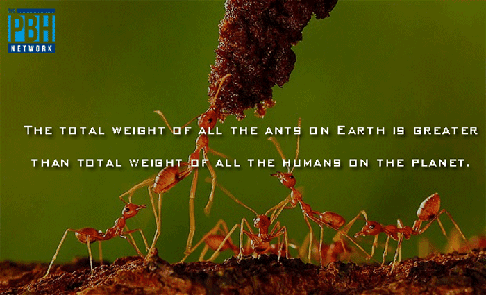 Weight Of Ants On Earth